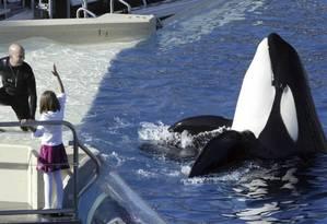 Apresentação de orca e seu treinador no parque SeaWorld San Diego Foto: Bizuayehu Tesfaye / AP