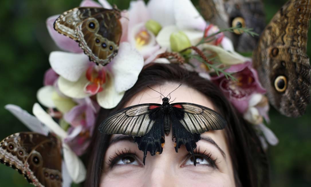 O evento caracteriza centenas de borboletas que emergem de suas pupas no ambiente morno na estufa ADRIAN DENNIS / AFP