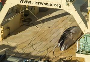 Imagem capturada pelo grupo Sea Shepherd mostra uma baleia minke morta no deque de um navio baleeiro japonês Foto: GLENN LOCKITCH / AFP