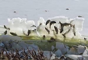 Departamento americano entrou no desafio com foto de peixes congelados Foto: Kelly Preheim / Divulgação