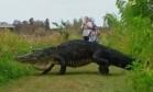 Imenso aligátor corcunda é avistado na Flórida Foto: Reprodução/Facebook