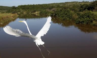 Reserva de proteção ambiental em Maricá: Rio recuperou mais de 4 mil hectares de Mata Atlântica em 30 anos Foto: Custódio Coimbra