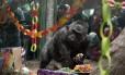 Colo comemorou aniversário de 60 anos no último mês; centenas de pessoas compareceram à festa Foto: HANDOUT / REUTERS