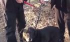 Cão é libertado após passar 15 anos acorrentado do lado de fora de casa Foto: Divulgação