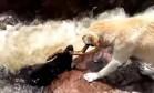 Cão 'herói' salva a vida de outro Foto: Reprodução/Facebook