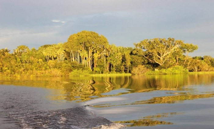 Amazônia Foto: Léa Cristina