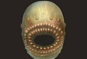 O deuterostômio 'Saccorhytus' tinha uma boca desproporcional ao seu tamanho Foto: Divulgação/Universidade de Cambridge