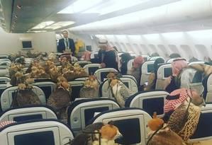 Falcões ocupam assentos em voo Foto: LENSOO, REDDIT / REPRODUÇÃO