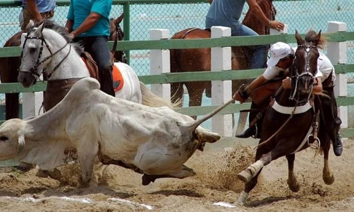 A vaquejada, prática tradicional em cidades do interior do Ceará, foi considerada ilegal pelo STF Foto: Prefeitura do Cantá/Divulgação