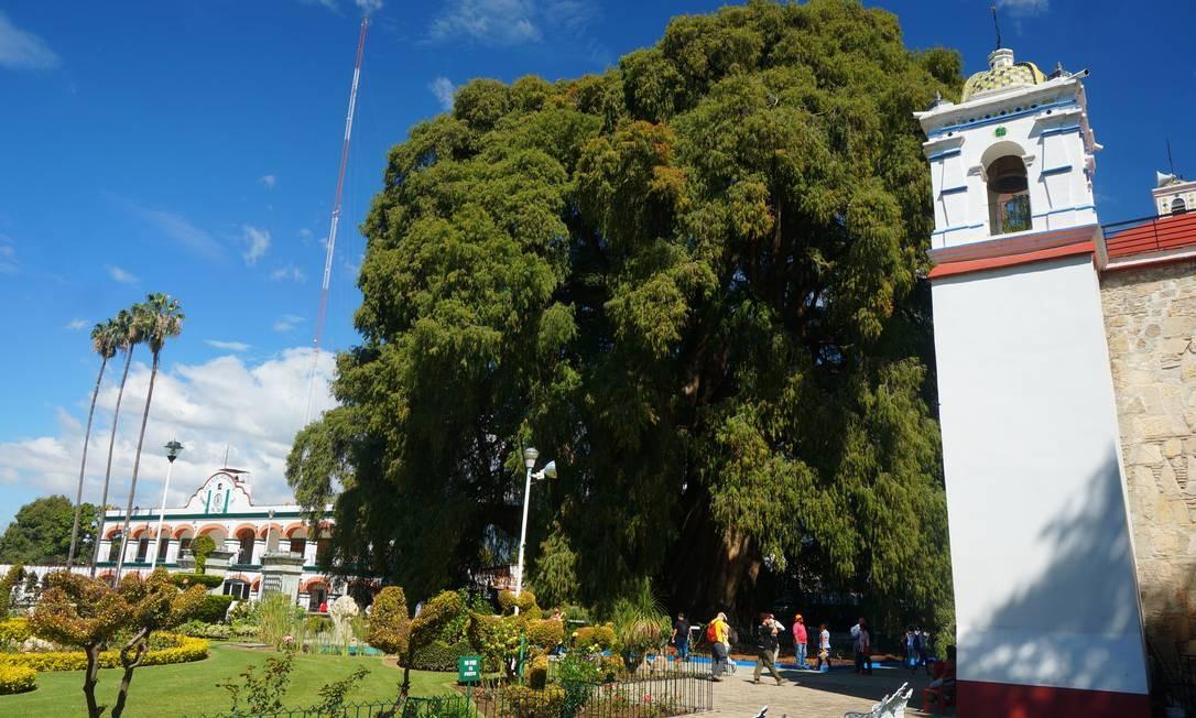 Santa María del Tule, a 13 quilômetros de Oaxaca, é um povoado de pouco mais de sete mil habitantes, cuja economia gira em torno de uma árvore. Mas não qualquer árvore: é uma de dois mil anos, tida como a de maior diâmetro de tronco do mundo, 14 metros e uma circunferência de 42 metros. Foto: Foto: Daniel Laper / Foto: Daniel Laper