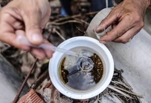 Mosquito Aedes aegypti é o transmissor dos vírus da dengue, zika e chicungunha Foto: André Coelho / Agência O Globo