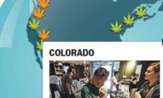 Cannabis Foto: O Globo