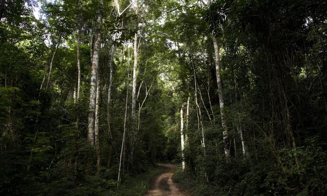 Trecho de Mata Atlântica: floresta vive novo drama com a febre amarela, que vem calando os macacos Foto: Mônica Imbuzeiro / O GLOBO