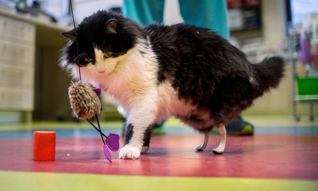 Pooh provavelmente perdeu as patas ao ser atropelado por um carro ou trem Foto: NIKOLAY DOYCHINOV / AFP