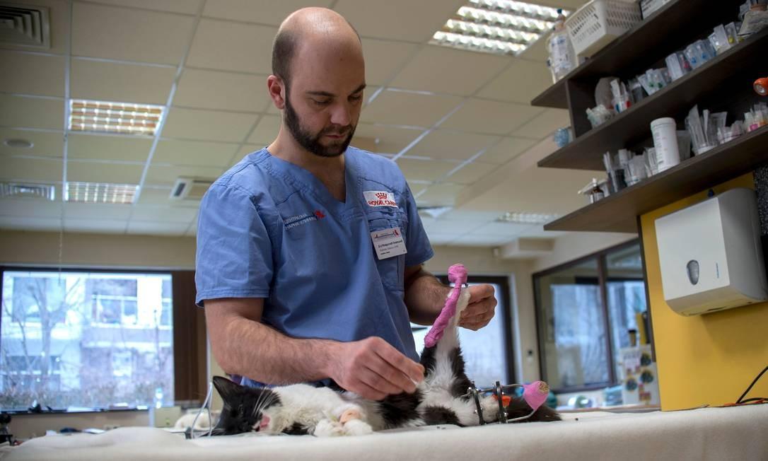 O veterinário Vladislav Zlatinov examina o gato Steven, que também passou por operação semelhante à de Pooh Foto: NIKOLAY DOYCHINOV / AFP