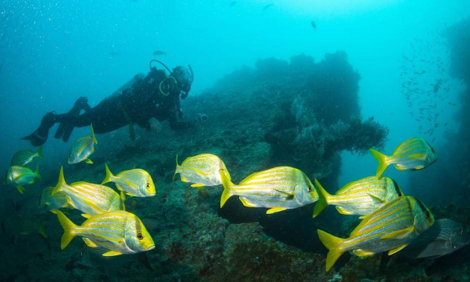 Mergulho no Parque Nacional Marinho dos Abrolhos Foto: Foto de Enrico Marcovaldi/Miramundos / .