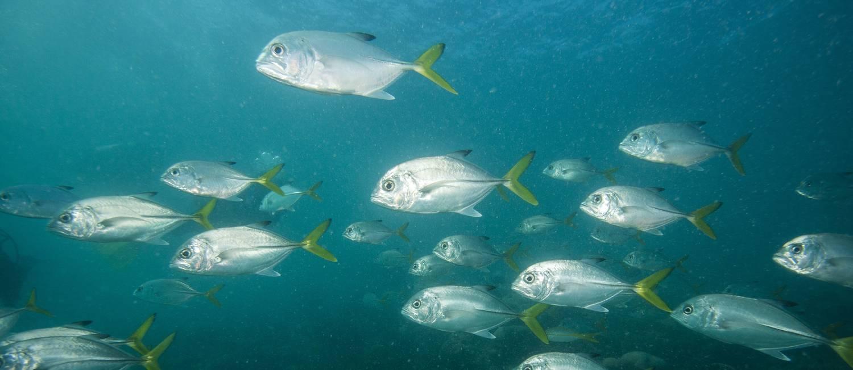 Biodiversidade marinha de Abrolhos Foto: Enrico Marcolvaldi/Miramundos