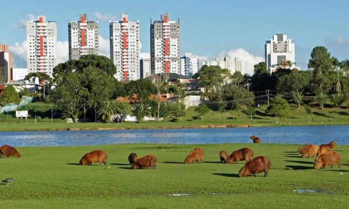 Curitiba Foto: Mario RobertoDuran/Creative Commons