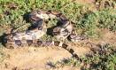 Jiboia flagrada perto da Serra da Tiririca: no ano passado, 73 animais da espécie foram capturados Foto: Felipe Queiroz