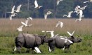 O Parque Nacional Kaziranga é um santuário para rinocerontes e outros animais, mas conflita com vilarejos vizinhos Foto: Divulgação/Parque Nacional Kaziranga