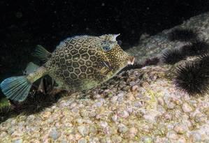 Redução dos níveis de oxigênio pode ser uma ameaça para ecossistemas marinhos Foto: Infoglobo