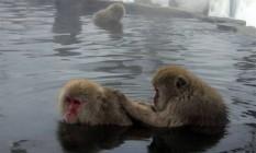 Os macacos japoneses são endêmicos do arquipélago e vivem no alto das montanhas Foto: WIKIPEDIA