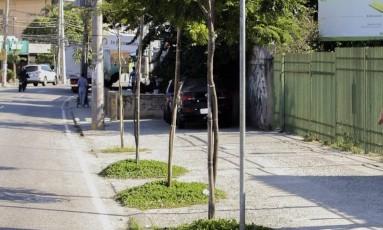 Estrada dos Três Rios. Rearborizada a pedido dos moradores Foto: Zeca Gonçalves / Zeca Gonçalves/15-6-2016