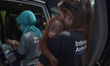 Vena foi resgatada na última semana Foto: ADEK BERRY / AFP
