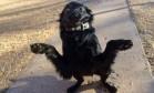 Foto de cão posto para adoção viraliza com comparação a meme Foto: Reprodução/Facebook