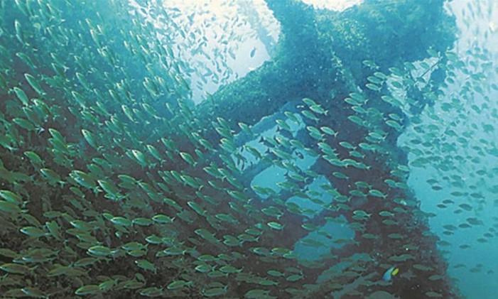 Ingleses no mar capixaba Foto: Ministério do Turismo/Divulgação