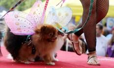 Cachorrinhos ganharam asas no carnaval carioca Foto: SERGIO MORAES / REUTERS