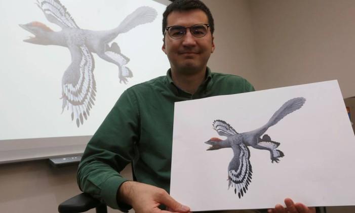 O paleontólogo Michael Pittman, da Universidade de Hong Kong, mostra uma ilustração de como seria o Anchiornis Foto: BOBBY YIP / REUTERS