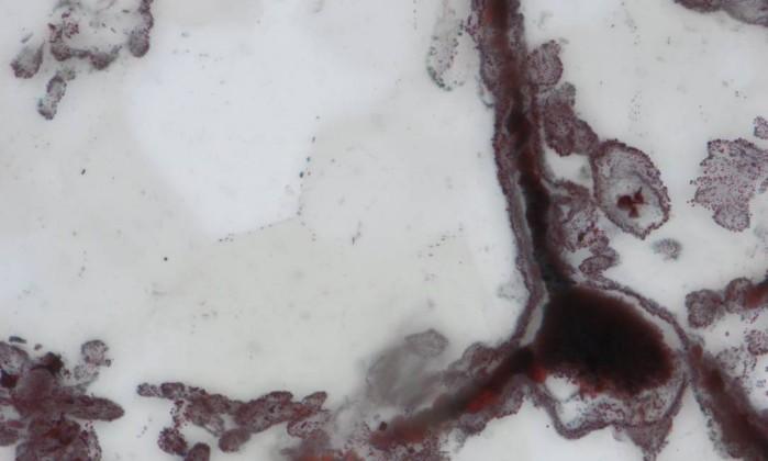 """Descobertos microorganismos fósseis que podem ter 4 bilhões de anos"""""""