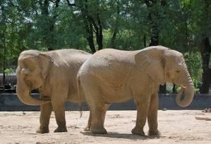 Elefantes deslocaram-se por mais de 30 quilômetros para evitar contato com leões e caçadores Foto: Free Images