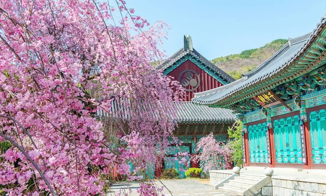 Há diversos palácios históricos em Seul, capital da Coreia do Sul, onde é possível observar bem a florada das cerejeiras. Os cinco principais são o Palácio Changdeokgung, o Palácio Deoksugung, o Palácio Unhyeongung, o Palácio Changgyeonggung (foto) e o Palácio Gyeongbokgung. Este ano, a expectativa é que ela comece no fim de março Foto: Divulgação