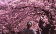 Originária da Ásia, a florada das cerejeiras se tornou uma das principais atrações turísticas do Japão, que está repleto das árvores de flores rosas em suas ruas e parques. A época da florada varia de acordo com a espécie e o local onde ela está. Em Tóquio (foto de 2016) ela está prevista para o fim de março.