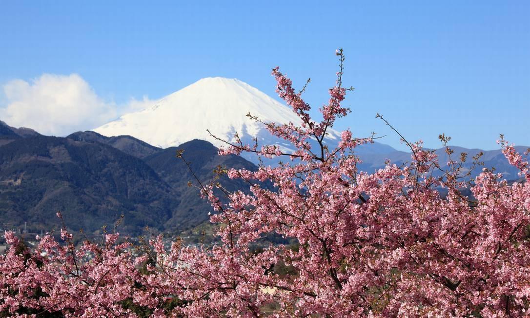 O ponto mais alto do Japão e um dos locais icônicos do país, o Monte Fuji, que abriga um vulcão, com mais de 3,7 mil metros de altitude, também é cercado de cerejeiras que, na época da florada, formam um belo cenário na região. Este ano, a expectativa da florada é para meados de abril Foto: Creative Commons