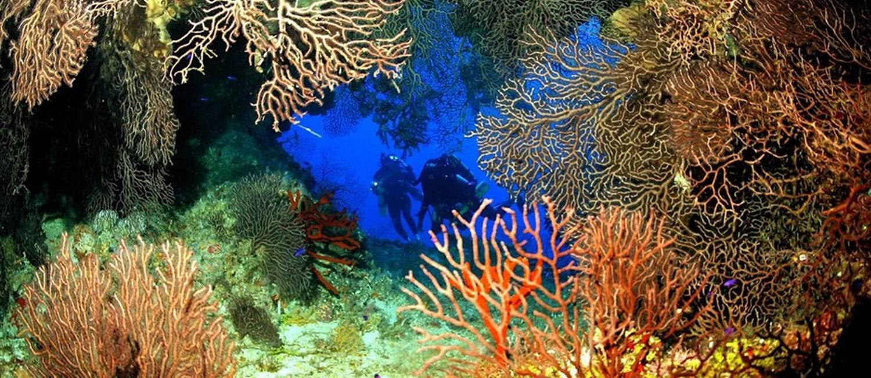 Mergulho nas Ilhas Cayman Foto: Divulgação