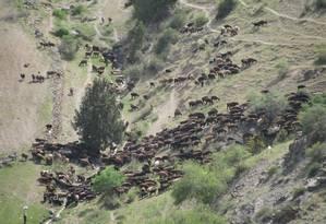 Rebanho de ovelhas passa por montanhas em área com 2 mil metros de elevação no Uzbequistão: caminho também seguido por mercadores e peregrinos na 'Rota da seda' Foto: Michael Frachetti/Nature