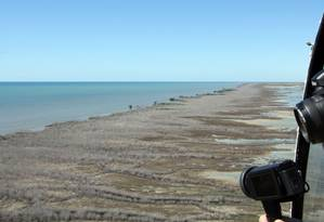 Manguezal com 7.400 hectares morreu no Golfo de Carpentária, na Austrália Foto: NORMAN DUKE / AFP