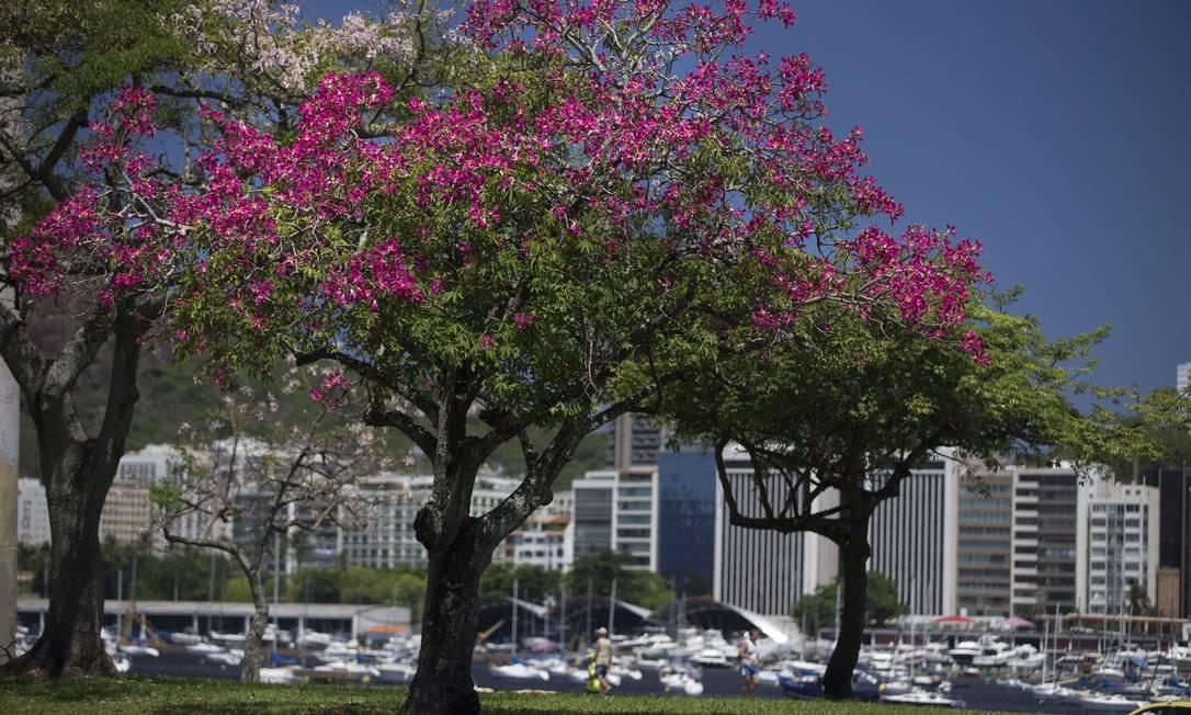 Árvores no Aterro do Flamengo Márcia Foletto / Agência O Globo