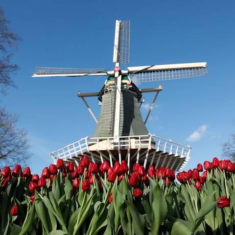 Tulipas vermelhas enfeitam moinho, símbolos da Holanda Foto: BAS CZERWINSKI / AFP