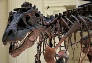 Estudo revoluciona árvore genealógica de dinossauros Foto: REUTERS