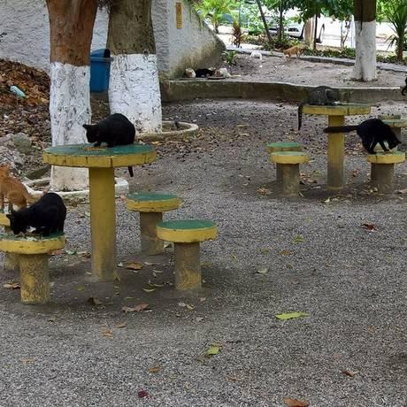 Gatos criados em apartamento no Fonseca ocupam parte da área de lazer do condomínio Foto: Agência O Globo / wilson mendes
