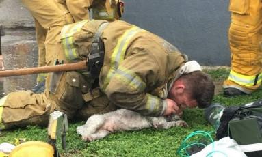 Bombeiro faz respiração boca a boca em cachorro depois de incêndio Foto: Reprodução Facebook
