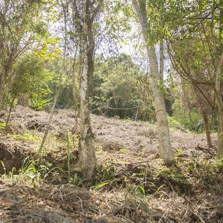 Depois. Homens portando foice capinaram a vegetação rasteira da mesma região Foto: Analice Paron / Analice Paron