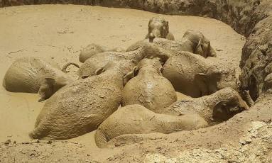 Elefantes ficaram presos em cratera aberta por bombardeio americano durante a Guerra do Vietnã Foto: KEO SOPHEAK / AFP