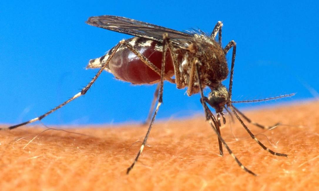 Município de Petrópolis tem cinco casos de malária confirmados
