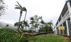 Ciclone derrubou árvore com fortes vntos em Airlie Beach, na Austrália Foto: STRINGER / REUTERS