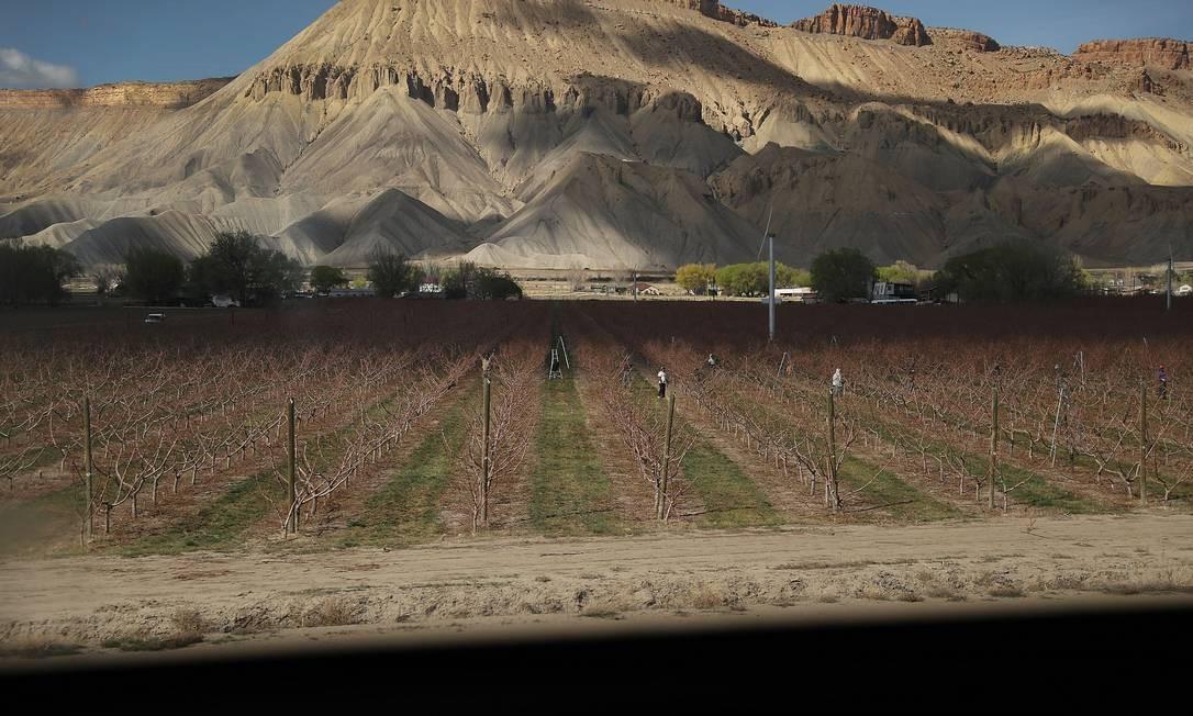 Toda a travessia passa por sete estados americanos e vários pontos turísticos, como as cadeiras de montanhas Rocky Mountain e Sierra Nevada. Na foto, uma plantação em fazenda na cidade de Grand Junction, no Colorado Foto: JOE RAEDLE / AFP